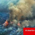 Marizilda Cruppe/Greenpeace